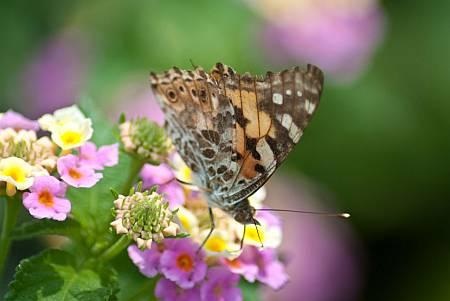 Abbildung: ein Schmetterling