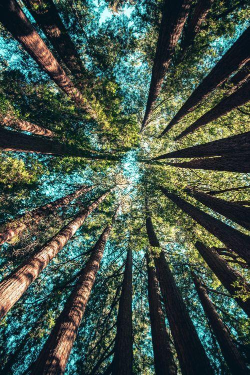 Abbildung: Wald mit großen, gesunden Bäumen