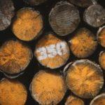 Artikelgrafik: 7 Vorteile von Möbeln aus FSC- bzw. PEFC-zertifiziertem Holz